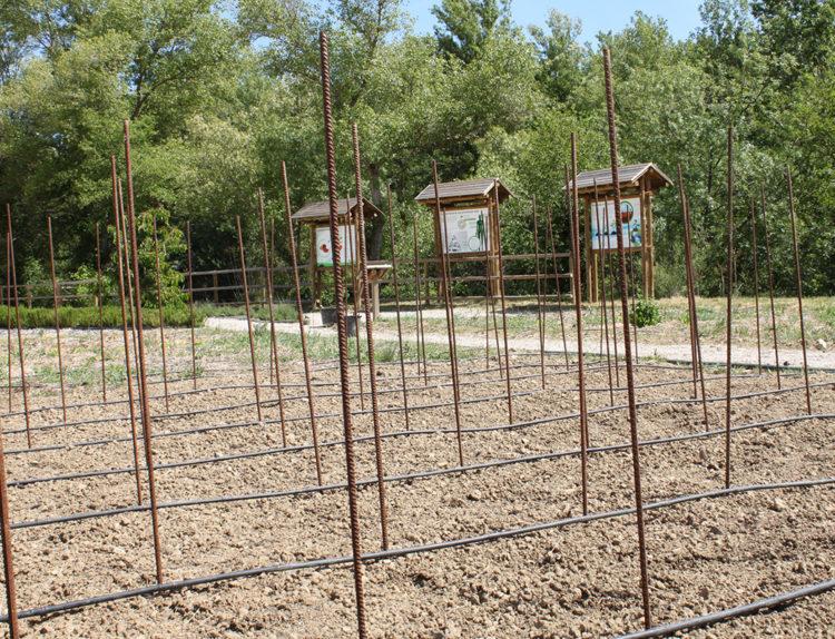 Plantación de hortalizas en Organik